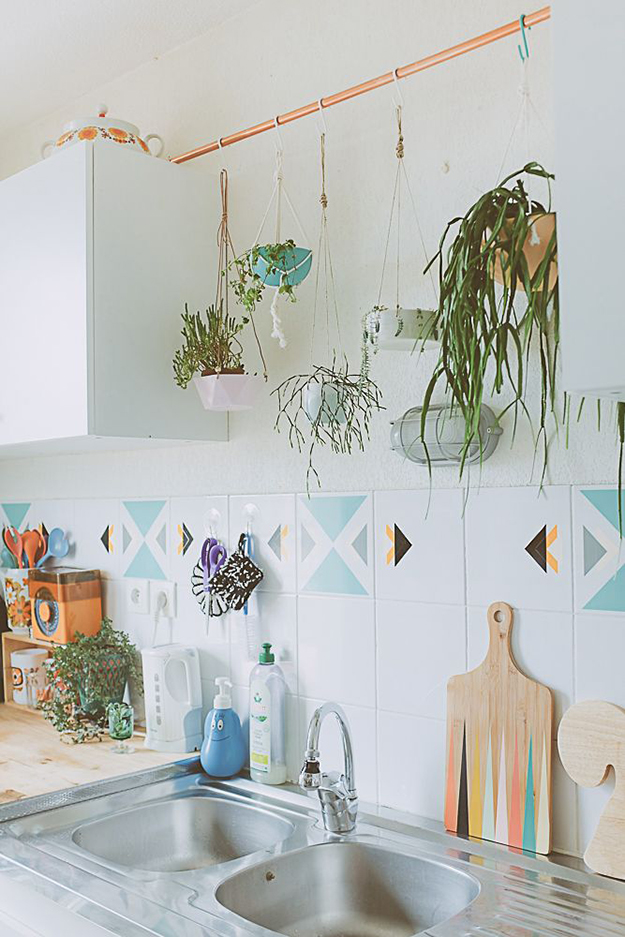 hanging plants in kitchen
