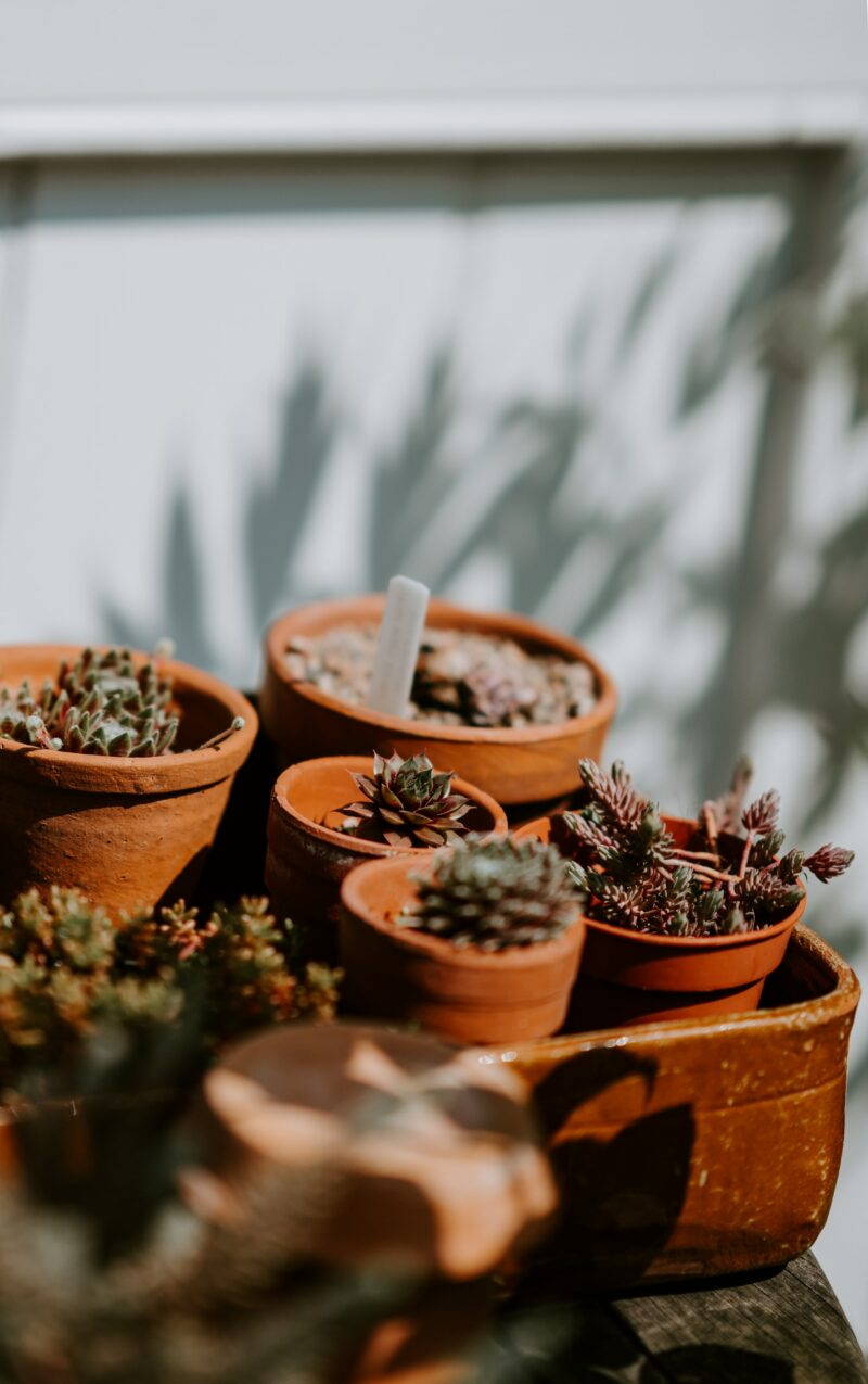 Terracotta potted plants