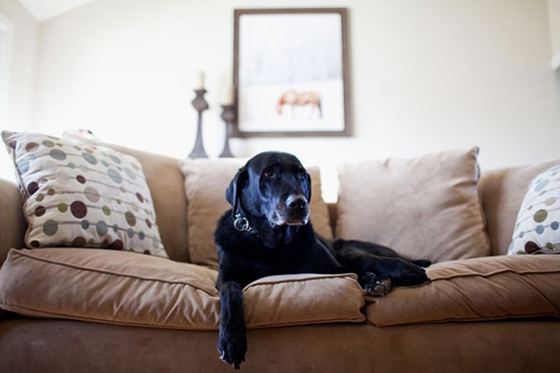 How To Pet Proof Your Decor By Kimberly Duran The Oak