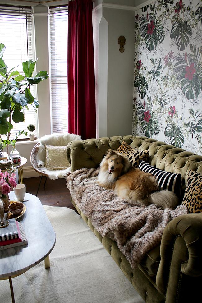 dog on sofa