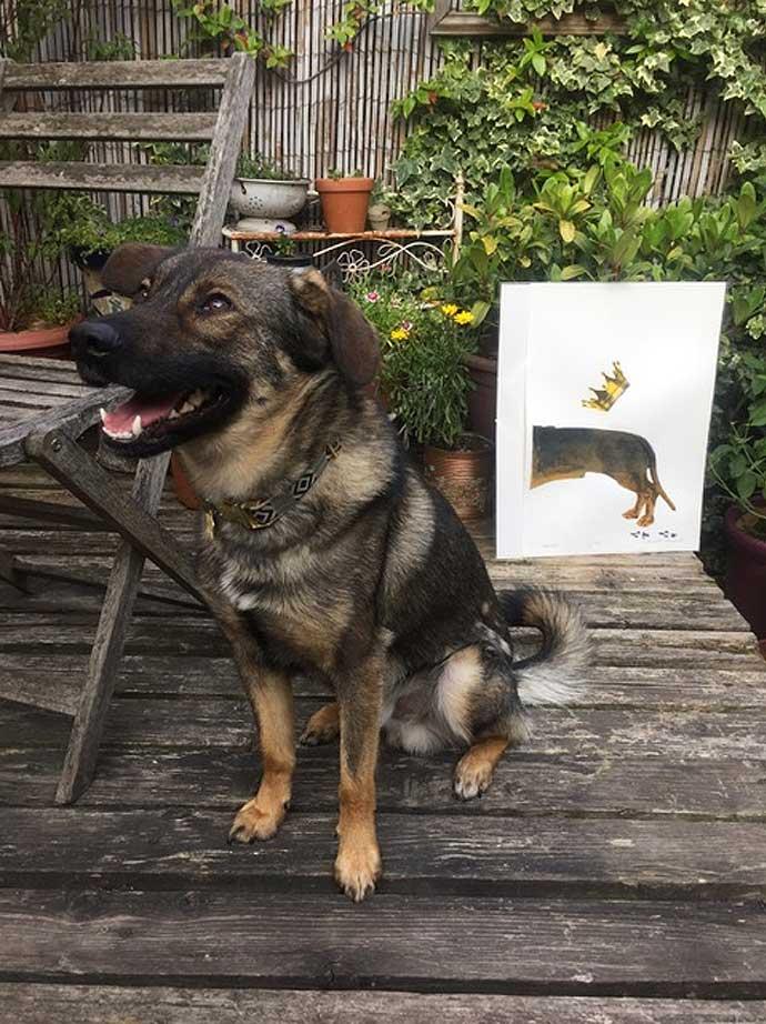 joanna thornhill dog with charlotte gerard print