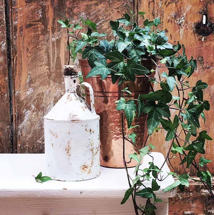 emma fishman pewter jug and plants