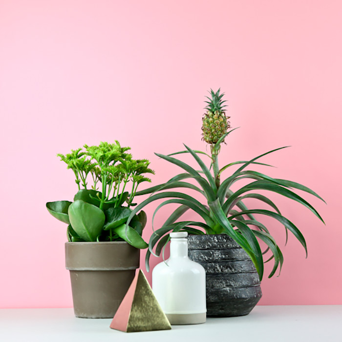 collection of bloombox club plants against pink background