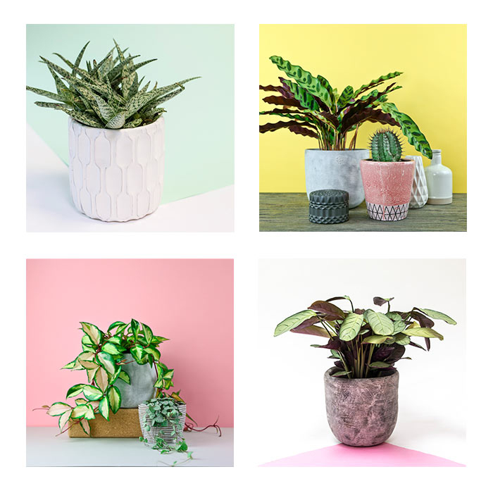 Collage of plants