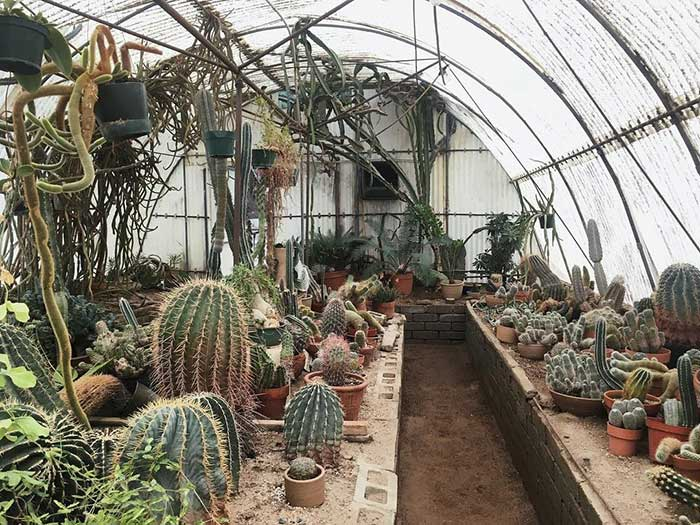 succulents in bontanical gardens from noughticulture