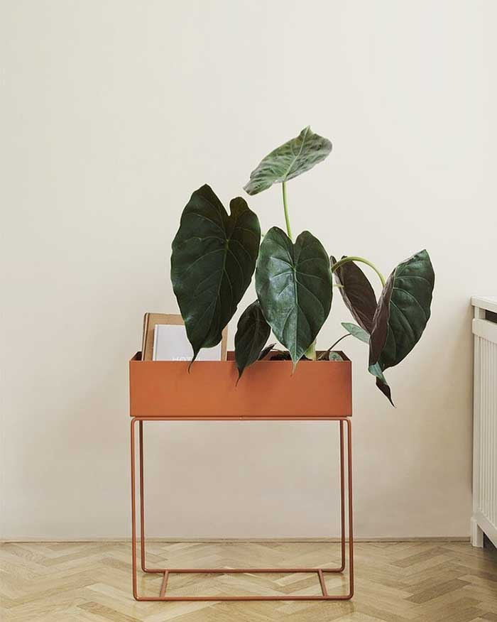 large leaf plant in bar cart from noughticulture