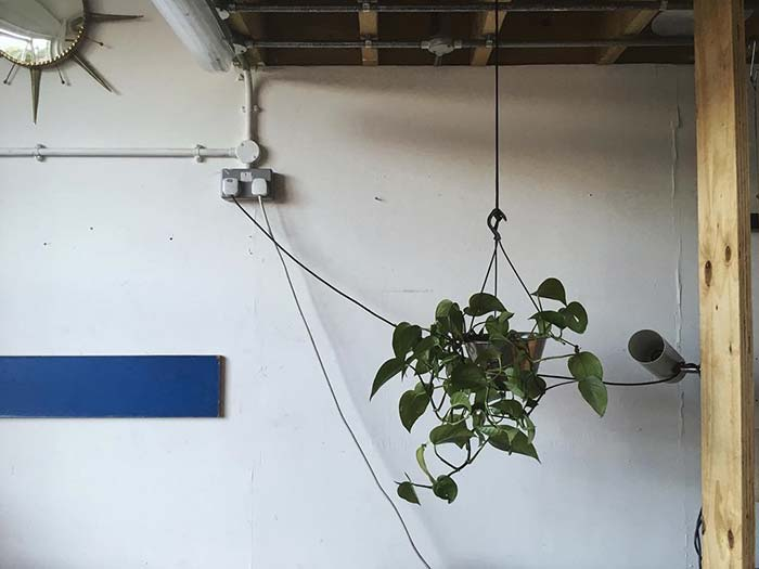 devils ivy in hanging planter from noughticulture
