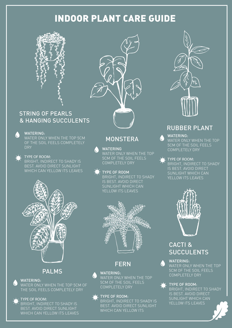 Plant Care Guide Infographic