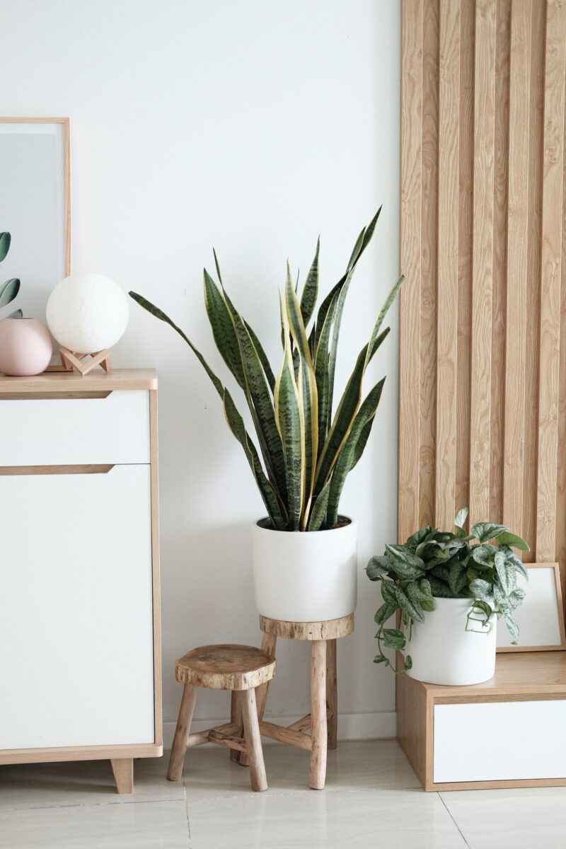 Indoor plants interior decor